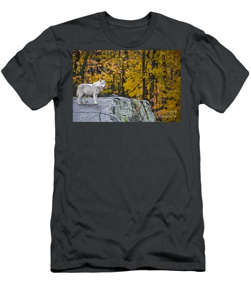 Arctic Wolf Men's T-Shirt (Athletic Fit)