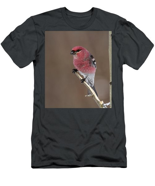 Pine Grosbeak Men's T-Shirt (Athletic Fit)