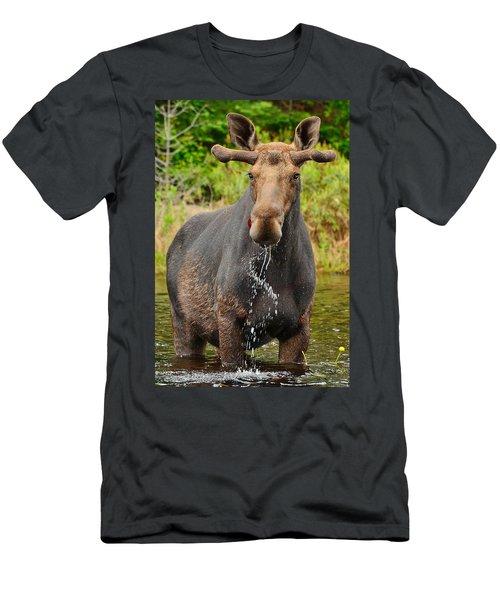 Algonquin Bull Men's T-Shirt (Athletic Fit)