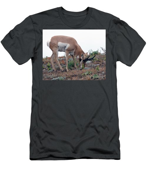 Antelope Grazing Men's T-Shirt (Athletic Fit)