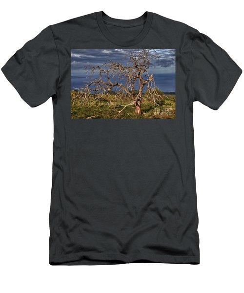 Bare Tree In Hana Maui Men's T-Shirt (Athletic Fit)