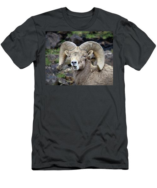 Men's T-Shirt (Slim Fit) featuring the photograph Bighorn Giant by Steve McKinzie
