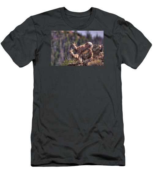 Bighorn Sheep Men's T-Shirt (Slim Fit) by CR  Courson