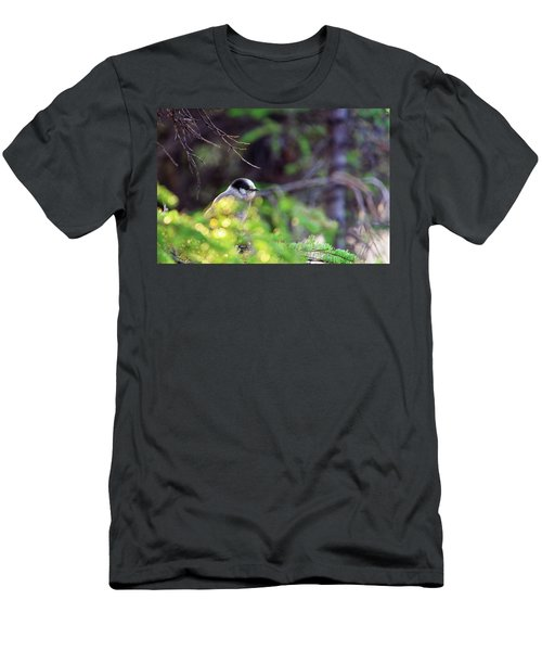 Black Capped Chicadee Men's T-Shirt (Athletic Fit)