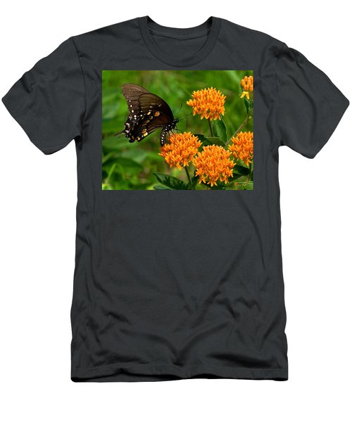 Black Swallowtail Visiting Butterfly Weed Din012 Men's T-Shirt (Athletic Fit)