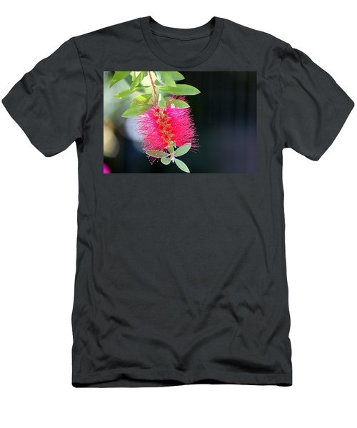 Bottlebrush Nectar Men's T-Shirt (Athletic Fit)