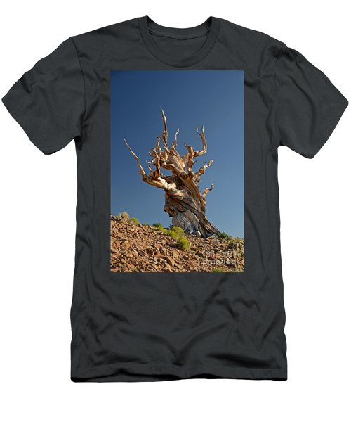 Bristlecone Pine Men's T-Shirt (Athletic Fit)