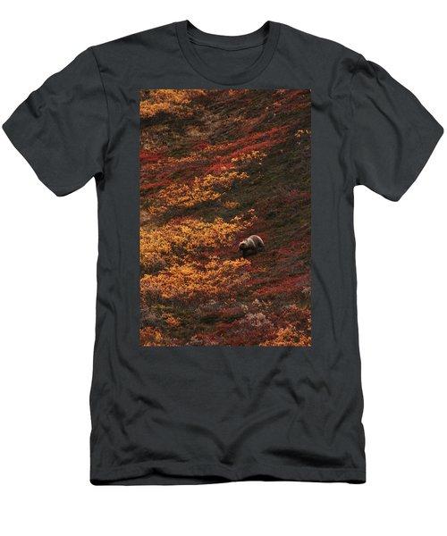 Brown Bear Denali National Park Men's T-Shirt (Athletic Fit)