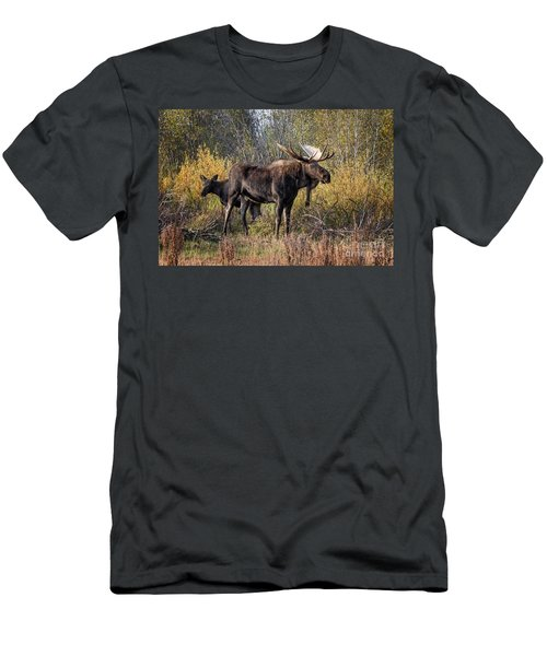 Bull Tolerates Calf Men's T-Shirt (Athletic Fit)