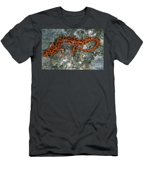 Cave Salamander Men's T-Shirt (Slim Fit) by Dante Fenolio