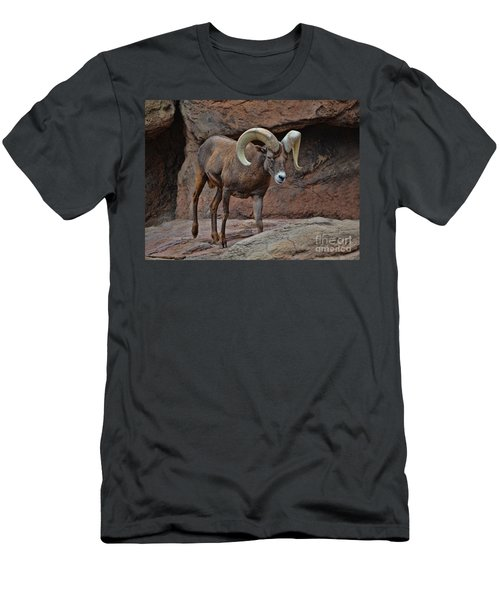 Desert Bighorn Sheep Ram I Men's T-Shirt (Athletic Fit)
