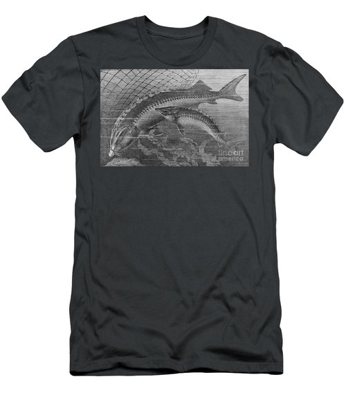 Giant & Common Sturgeon Men's T-Shirt (Athletic Fit)