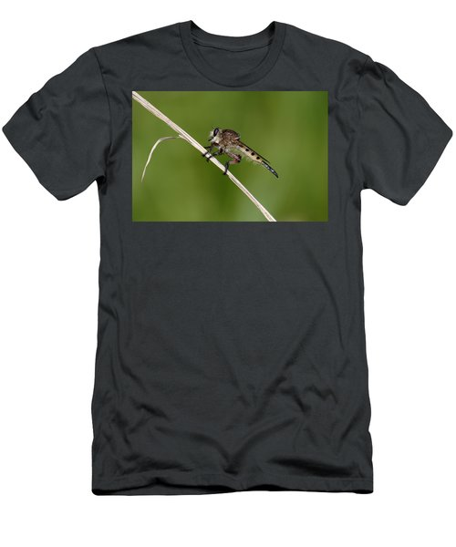 Giant Robber Fly - Promachus Hinei Men's T-Shirt (Athletic Fit)