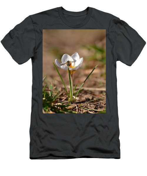 Hoverfly Visitng A Crocus Men's T-Shirt (Athletic Fit)