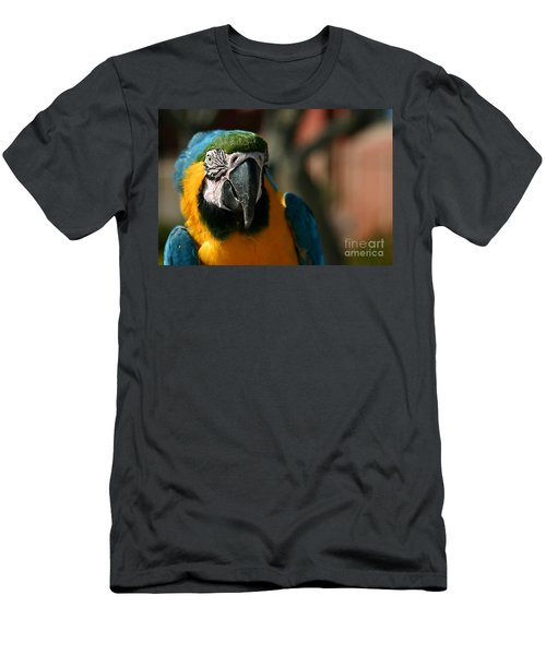 Macaw Men's T-Shirt (Athletic Fit)
