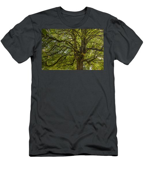 Majestic Tree Men's T-Shirt (Athletic Fit)