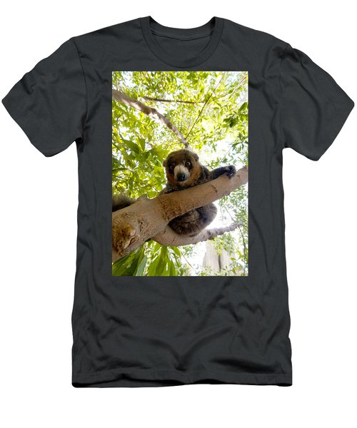 Mongoose Lemur Men's T-Shirt (Athletic Fit)