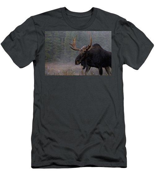 Moose, Algonquin Provincial Park Men's T-Shirt (Athletic Fit)