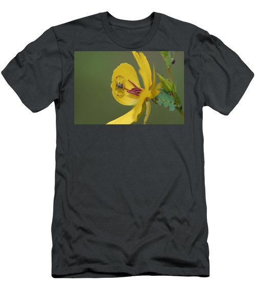 Partridge Pea And Matching Crab Spider With Prey Men's T-Shirt (Athletic Fit)