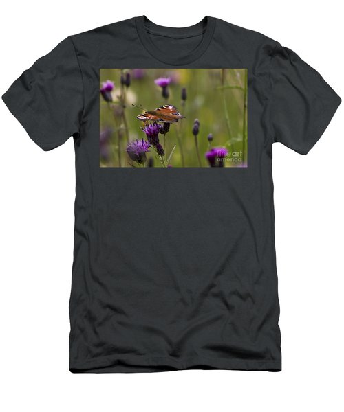 Peacock Butterfly On Knapweed Men's T-Shirt (Athletic Fit)