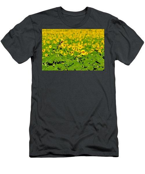 Peeking Above  Sea Of Yellow Men's T-Shirt (Athletic Fit)