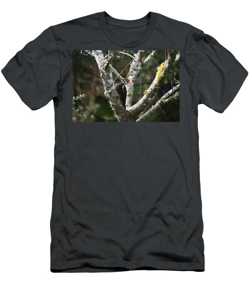 Pileated Woodpecker In Cherry Tree Men's T-Shirt (Slim Fit) by Kym Backland