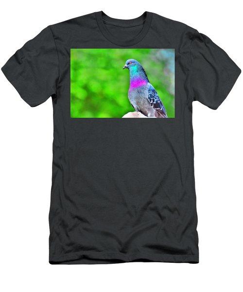 Rainbow Pigeon Men's T-Shirt (Athletic Fit)