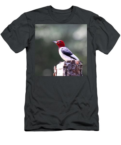 Red-headed Woodpecker - Statue Men's T-Shirt (Athletic Fit)