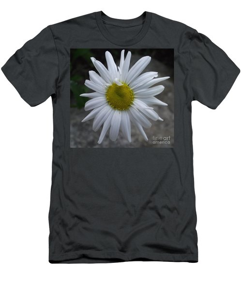 Shasta Daisy Men's T-Shirt (Athletic Fit)