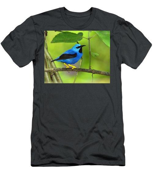 Shining Honeycreeper Men's T-Shirt (Athletic Fit)