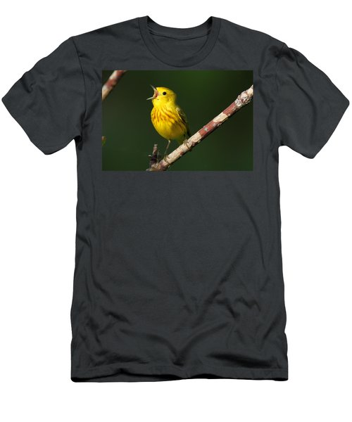 Singing Yellow Warbler Men's T-Shirt (Athletic Fit)