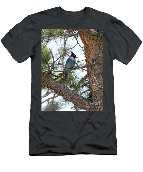 Stellar's Jay Men's T-Shirt (Athletic Fit)