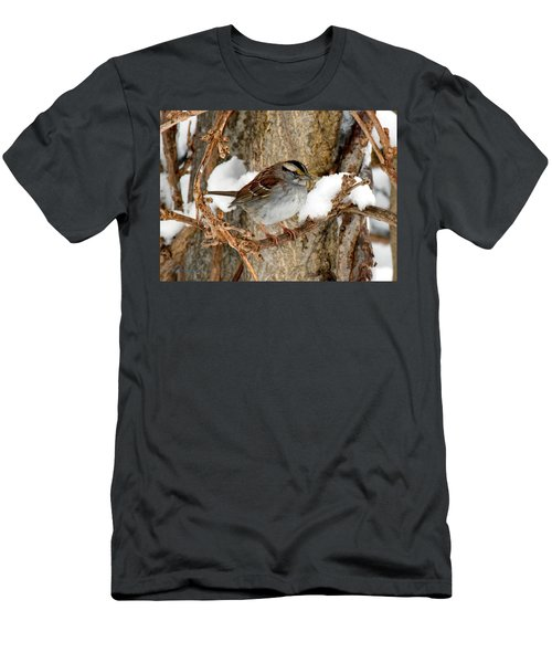 White Throat Men's T-Shirt (Athletic Fit)