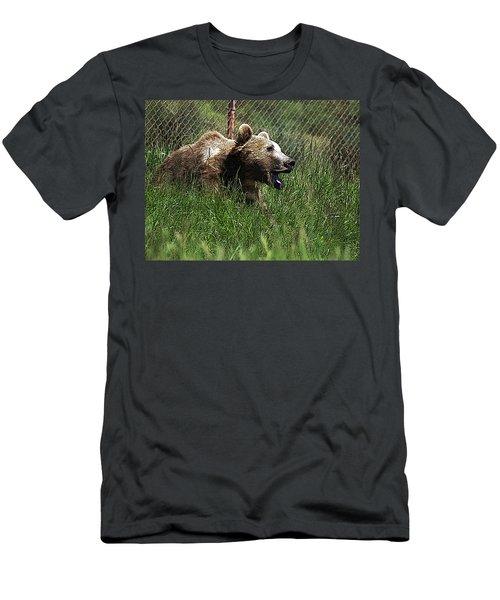 Wild Life Safari Bear Men's T-Shirt (Athletic Fit)