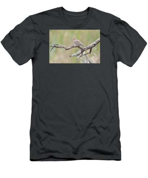 Men's T-Shirt (Slim Fit) featuring the photograph    Early Mourning Dove by Kathy Gibbons
