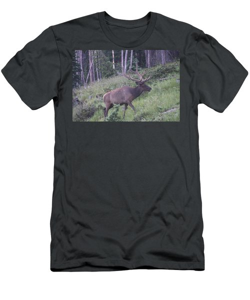 Bull Elk Rmnp Co Men's T-Shirt (Athletic Fit)