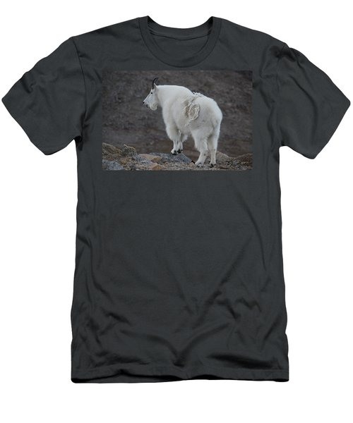 Men's T-Shirt (Athletic Fit) featuring the photograph Mountain Goat Mnt Evans Co  by Margarethe Binkley