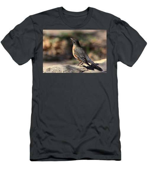 American Robin On Rock Men's T-Shirt (Slim Fit) by Sheila Brown