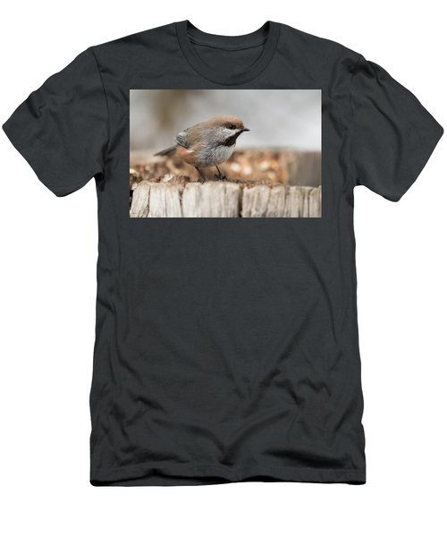 Boreal Chickadee Men's T-Shirt (Athletic Fit)