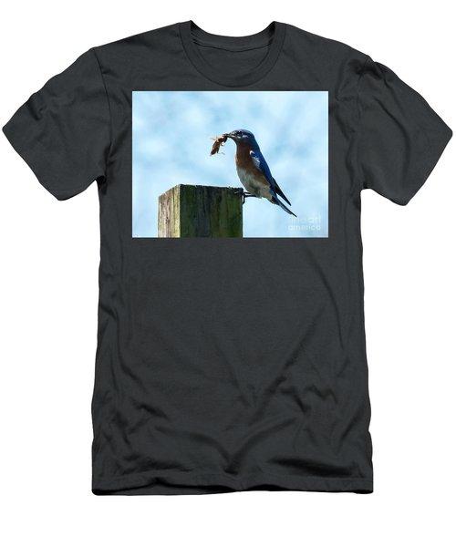 Eastern Bluebird Men's T-Shirt (Athletic Fit)