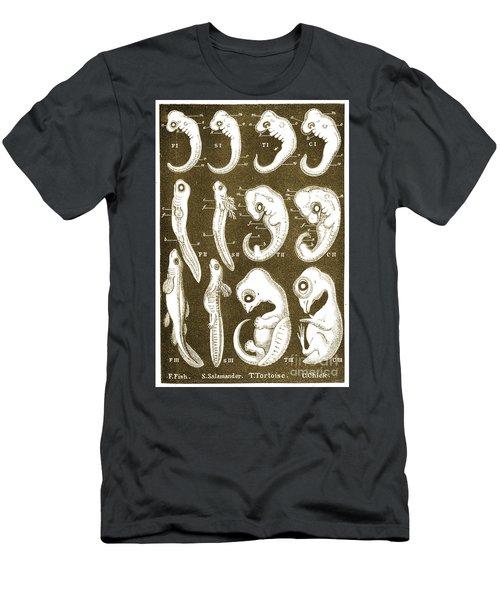 Ernst Haeckels Evolution Of Man, 1874 Men's T-Shirt (Athletic Fit)