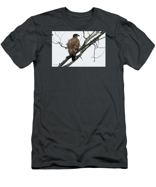 Juvenile Eagle  Men's T-Shirt (Slim Fit) by Steven Clipperton