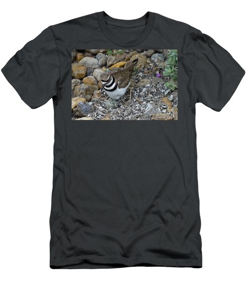 Killdeer With Eggs Men's T-Shirt (Athletic Fit)