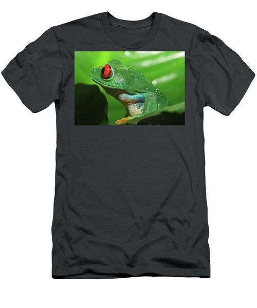 Red Eyed Tree Frog Men's T-Shirt (Athletic Fit)