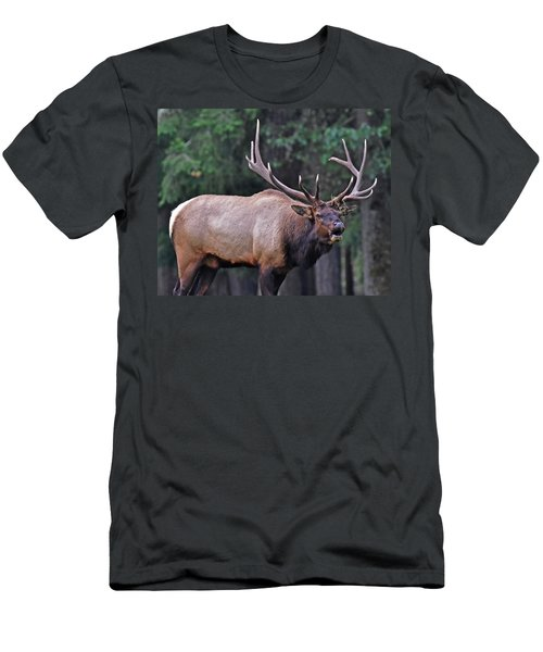 Men's T-Shirt (Slim Fit) featuring the photograph  Royal Roosevelt Bull Elk by Jack Moskovita