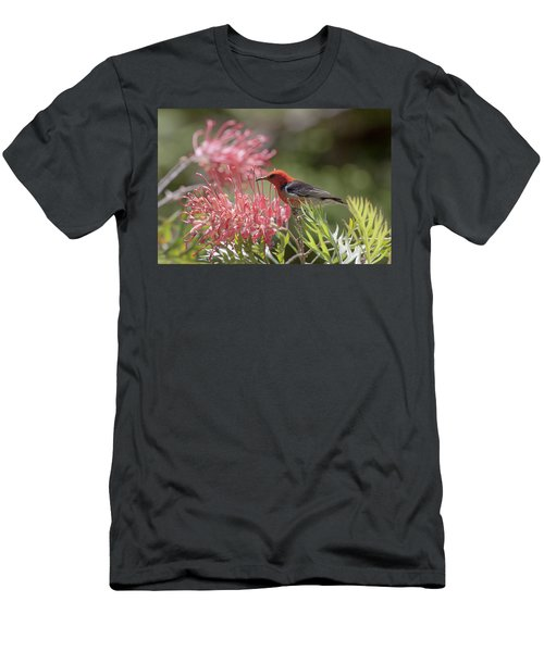 Scarlet Honeyeater Men's T-Shirt (Athletic Fit)