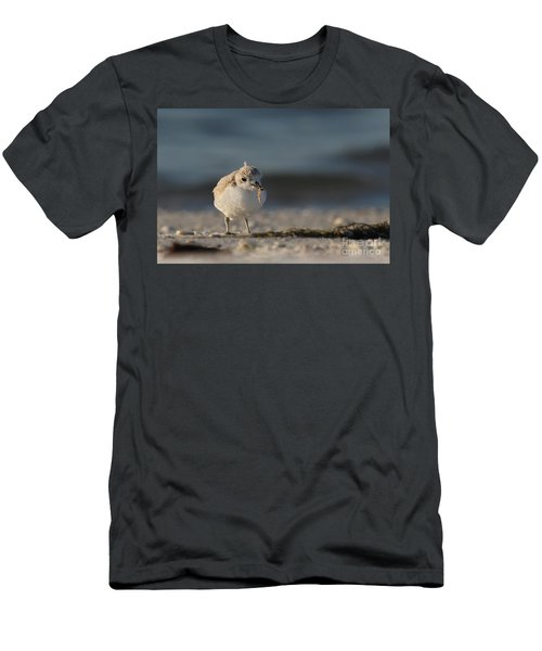 Snowy Plover Men's T-Shirt (Athletic Fit)