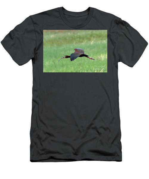 White-faced Ibis Men's T-Shirt (Athletic Fit)