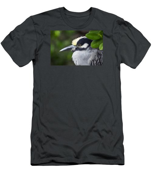 Yellow-crowned Night Heron Men's T-Shirt (Athletic Fit)