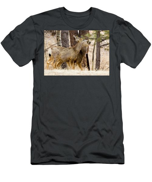 Mule Deer In The Pike National Forest Of Colorado Men's T-Shirt (Athletic Fit)